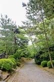Gehweg-Weg-Weg mit grünen Bäumen in Forest Beautiful Alley In Lizenzfreie Stockfotos
