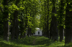 Gehweg-Weg-Weg mit grünen Bäumen in Forest Beautiful Alley In Park Bahn-Weise durch dunklen Wald Stockfoto