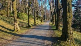 Gehweg-Weg-Weg mit grünen Bäumen im Wald Lizenzfreies Stockbild