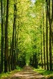 Gehweg-Weg-Weg mit grünen Bäumen im Wald Lizenzfreie Stockbilder