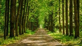 Gehweg-Weg-Weg mit grünen Bäumen im Wald Stockfotos