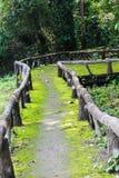 Gehweg zum Dschungel Lizenzfreies Stockbild