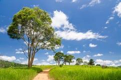 Gehweg zur Natur Lizenzfreies Stockbild