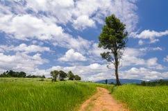 Gehweg zur Natur Lizenzfreie Stockbilder