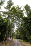 Gehweg zwischen Wald Stockfotografie