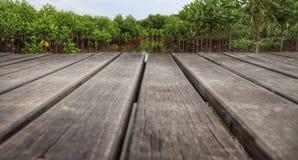 Gehwegbrücke zum Mangrovenwald Stockfoto