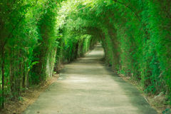 Gehwegtunnel von Bäumen stockfotografie