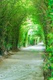 Gehwegtunnel von Bäumen lizenzfreies stockbild