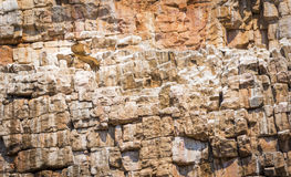 Geier-Ansteigen Stockbilder