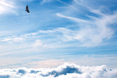 Geier auf Himmel Stockfotografie