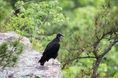 Geier-Bussardvogel auf Leiste lizenzfreie stockbilder