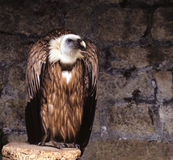 Geier, der in einem Vogelhaus steht Stockbilder