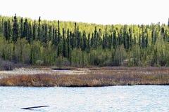 Geikie flod i Saskatchewan Fotografering för Bildbyråer