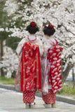 Geiko & Sakura Fotografia Stock