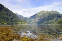 Geiranger. Fjor reflexes and algae royalty free stock photography