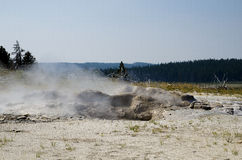 Geiser de parc national de Yellowstone Photos libres de droits