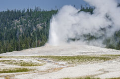 Geiser de parc national de Yellowstone Photo libre de droits