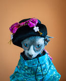 Geisha Cat Stock Photos