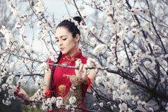 Geisha im roten Kimono in Kirschblüte Stockfotografie