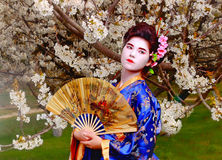 Geisha. Japanese geisha in blooming cherry garden royalty free stock images