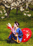 Geisha. Japanese geisha in blooming cherry garden Stock Photo