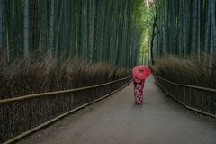 Geisha with umbrella in Arashiyama bamboo forest stock photos