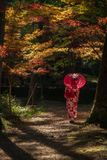 Geisha with umbrella in the forest during Autumn stock image