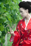 Geisha in vineyard Royalty Free Stock Image