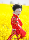 Geisha in the yellow field. Geisha in red kimono in the yellow field. Professional make-up, traditional hairstyle Stock Images