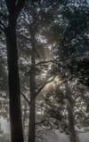 Geist des Waldes lizenzfreie stockfotografie