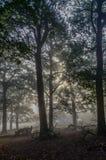 Geist des Waldes stockfotografie