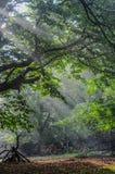 Geist des Waldes lizenzfreies stockfoto