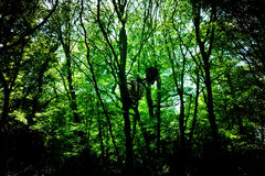 Geist im Holz Stockfoto