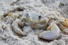 Geist-Krabbe Stockfotografie