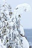 Geistbäume in Yellowstone-Park Stockfoto