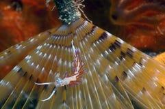 Geistfische Stockfotos