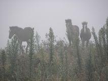 Geistpferde im Nebel stockfotografie