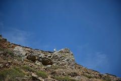 Geit op de rots Stock Foto