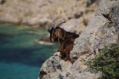 Geit op Patmos Stock Afbeelding