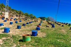 Geiten dichtbij Algodonales in provincie Cadiz, Andalusia, Spanje stock foto's
