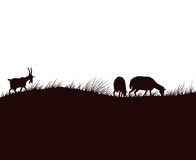Geiten en schapen op de weide Stock Afbeelding