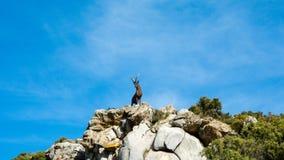 Geitstandbeeld in een berg in marbella stock foto