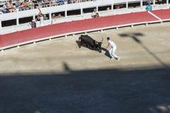 Gejagt durch den Stier lizenzfreie stockfotos