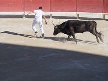 Gejagt durch den Stier stockfotografie