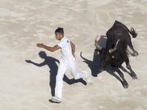 Gejagt durch den Stier stockfotos