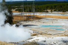 gejzerów basenowi norris Yellowstone Zdjęcie Royalty Free