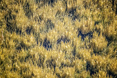 Gejzer gorąca wiosna Fotografia Stock