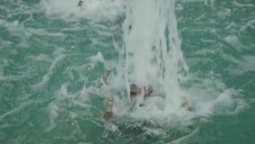Gejzer rzuca kolumnę woda w miasto fontannie zbiory wideo