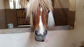 Gek Paard stock fotografie