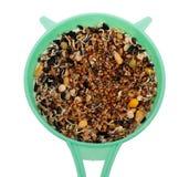 Gekeimte Samen in einem Sieb Lizenzfreies Stockbild